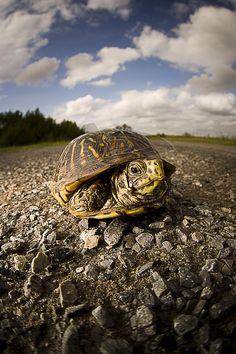 <3 turtles