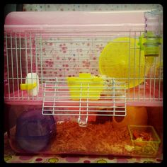My hamster cage Dwarf Hamster Cages, Hamster Stuff, Animal, Diy, Bricolage, Do It Yourself, Animals, Homemade, Diys