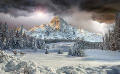 Earth Mount Chephren  Canadian Rockies Valley Winter Landscape Forest Cloud Mountain Earth Tree Snow Deer Wallpaper