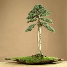 Bonsai styles are different ways of training your bonsai to grow the way you want it to. Get acquainted with these styles which are the basis of bonsai art. Mini Bonsai, Indoor Bonsai, Bonsai Plants, Bonsai Garden, Ikebana, Blue Atlas Cedar, Bonsai Styles, Art Asiatique, Decoration Plante
