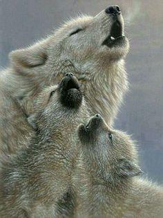 Huilende wolven