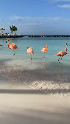 Beautiful Photos Of Nature, Beautiful Nature Wallpaper, Beautiful Places To Travel, Beautiful Beaches, Animals Beautiful, Beautiful Birds, Aruba Flamingos, Flamingo Beach Aruba, Maldives Beach