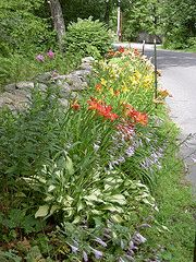 Creating a Boulevard Garden Sidewalk Landscaping, Home Landscaping, Side Garden, Garden Types, Wedding Make Up, Garden Plants, Wedding Designs, Gardening Tips, Designer