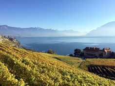Lavaux, Bourg-en-Lavaux, Switzerland — by HikinGoat Lausanne, Great Places, Switzerland, Places To Visit, Outdoor, Beautiful, Outdoors, Outdoor Games, Outdoor Living