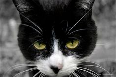 Angry cat, via Flickr. My photography. Angry Cat, Photography Photos, Cats, Animals, Gatos, Animales, Animaux, Animal, Cat