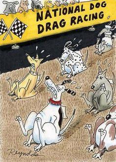 poor pups!!