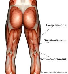 Why do 80% of hamstring injuries happen int he outer hamstrings?