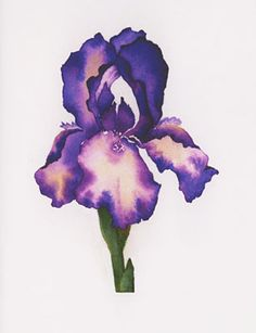 water color iris flower pics | Patsy Barry - watercolor notecards - Purple Iris - flowers