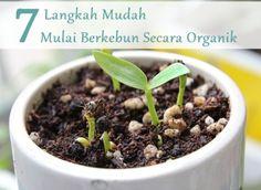Rumah Semuti: 7 Langkah Mudah Memulai Berkebun Secara Organik