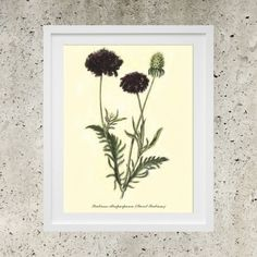 Vintage Botanic Garden Black Flowers  SALE Wall by DigitalBanana