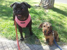 lola y Wendy