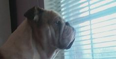 Boudreaux watching out the window.