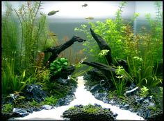 A great deal of men and women love aquascapes since they give us a way to experience a completely different world. Every aquascape needs to have a focus. The real key to any excellent aquascape is to begin at the bottom. Aquarium Garden, Aquarium Landscape, Betta Fish Tank, Nature Aquarium, Aquarium Fish Tank, Planted Aquarium, Home Aquarium, Aquascaping, Nano Cube