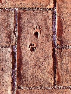 """repin. """"We noticed these permanent little paw prints in a few of the bricks on the rooftop of the CaixaForum."""""""