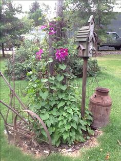 Old bed spring with morning Glories .