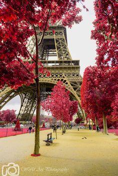 Champs du Mars, Eiffel tower, Red tree, Paris photo, Canvas print, Wall decor, Home decor, Paris decor, Paris canvas, Gallery wrap