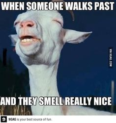 My face when someone smells good