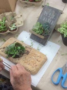 little plants big impact...