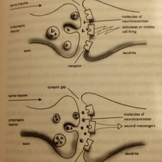 The synapse and synaptic cleft. Way cool.
