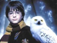 A young wizard's best friend