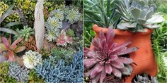 The charm of succulent plants