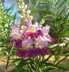 flores extravagantes y hermosas - Buscar con Google