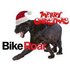 Cycling Events, Merry Christmas To You, Road Cycling, Bicycle, Kitty, Funny, Photos, Little Kitty, Bike