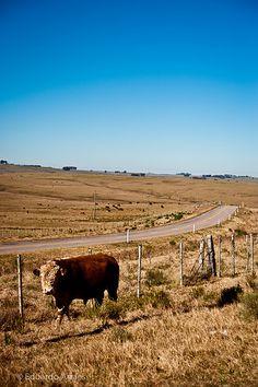 pampas, Treinta y Tres, Uruguay