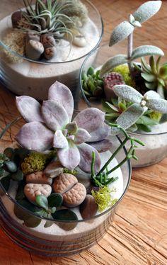 Terrarium by BOTANY {floral studio}