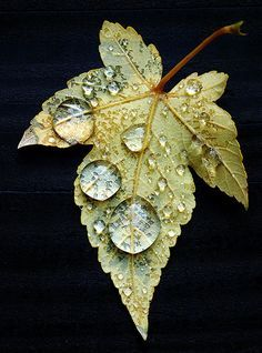 Leaf with droplets on terrace stair - Large On Black in our garden - Frankfurt-Nordend Levitation Photography, Water Photography, Exposure Photography, Flower Photography, Photography Tricks, Urban Photography, Abstract Photography, Dew Drops, Rain Drops