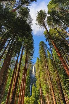Secrets of Yosemite: Where to Sleep in a Former Brothel, Drink with a Park Ranger, and More
