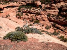 bushes with rock formation. - View of bushes with rock formation.