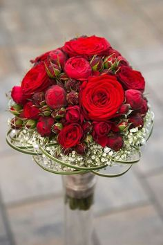 Rote Rosen                                                                                                                                                                                 Mehr