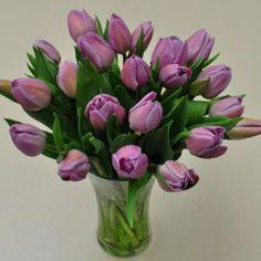 Lavender Cut Tulips