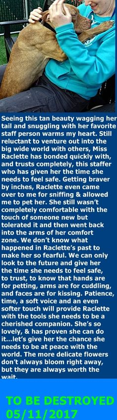 MURDERED 05/11/2017 --- Manhattan Center My name is RACLETTE. My Animal ID # is A1110943. I am a female tan am pit bull ter mix. The shelter thinks I am about 3 YEARS old. I came in the shelter as a STRAY on 05/03/2017 from NY 10470, owner surrender reason stated was STRAY. http://nycdogs.urgentpodr.org/raclette-a1110943/