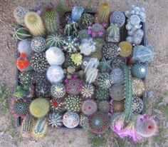 Have a few of these in my terrariums!