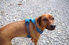 Hundegeschirr oder Halsband?