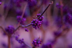 purple-mood-pictures-from-the-most-mysterious-color-09
