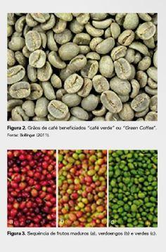Produção de café cereja descascado by Juarez De Sousa e Silva - issuu