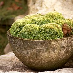 rustic moss-filled bowl