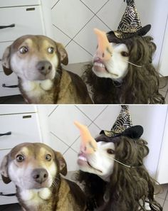 The funniest thing you'll see today. #funnydogs