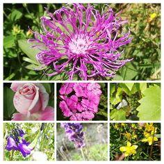 Natural World, Garden Sculpture, Outdoor Decor, Nature, Plants, Naturaleza, Plant, Nature Illustration, Off Grid