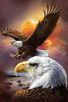 [Visit to Buy] Diy Diamond Painting Animals Birds Eagles Cross Stitch Square Rhinestone Pictures Of Crystals Diamond Embroidery full gear The Eagles, Bald Eagles, Eagles Live, Photo Aigle, Beautiful Birds, Animals Beautiful, Benfica Wallpaper, Aigle Animal, Eagle Drawing