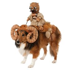 Sand People Ride Cute Dogs In Single File, To Hide Their Numbers