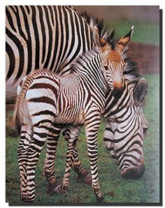 Add this unique wall poster at your home and enhances the beauty of your home. This poster captures the image of Zebra safari animal standing in a forest is sure to make this poster a centre of attraction. This poster will compliment any room in your home and sure to make this poster a conversation piece. Get up and grab this beautiful wall poster for its high quality paper with a high degree of color accuracy which ensures long lasting beauty of the product.