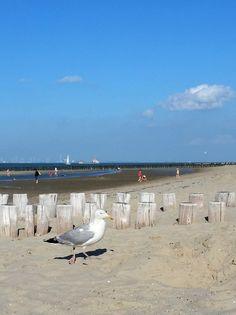strand-breskens-netherlands-moewe-meer