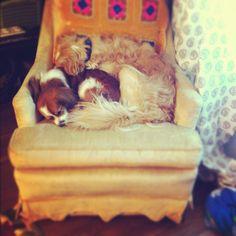 desire to inspire - desiretoinspire.net - Monday's pets on furniture - part2