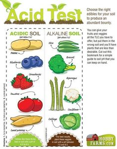 Gardening Basics: How To Test Your Soil   Survival skills, survival guns, survival guide