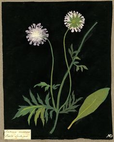 Mary Delany, wonderful artist from 1700s who used cut paper to create amazing botanicals!
