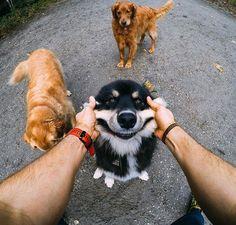 Photo of the Day! Smile! It's the weeeeeeeeeeeekend! #📸: @timthetoothninja #GoPro #GoProPets